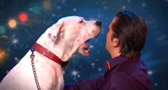 Wanneer deze hond in de spotlights staat, kan niemand zijn oren geloven!