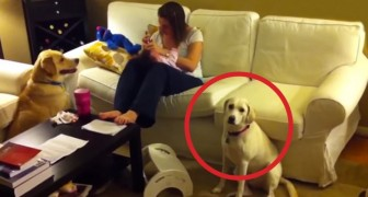 A baby is crying, but look how the dog reacts ... BRILLIANT !