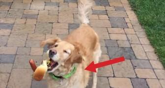 Ein Hund versucht das Fressen im Flug zu fangen: Ihr werdet eich AUGENBLICKLICH verlieben