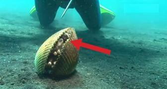 Parece que um molusco normal, mas olha o que tem dentro dele...