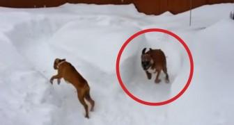 De grap die de oudere hond uithaalt bij de pup is echt grappig!