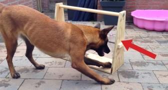 Esto es un juego simple y GENIAL que tendra a tu perro ocupado por largo tiempo