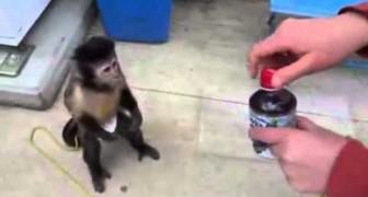 Eine Affe kauft sich was zu trinken