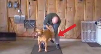 Was dieser Mann für seinen Hund macht ist wirklich BESONDERS