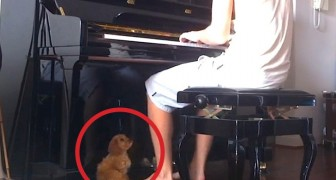 Een jongen gaat achter de piano zitten, de reactie van zijn hond is geweldig...