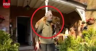 Un homme sauve un renard blessé par un chien... leur vie ensemble est émouvante