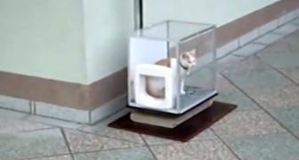 Appena il gatto entra nella scatola trasparente avviene qualcosa di GENIALE.