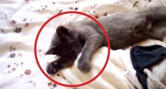 Ze vraagt haar kat om op te staan: de manier waarop hij REAGEERT laat je verbijsterd