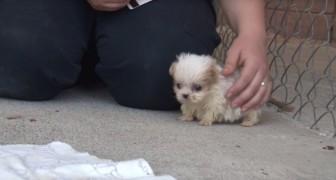 Het hondje werd gered vanuit een illegale fokkerij, en dit is nu zijn beste vriend