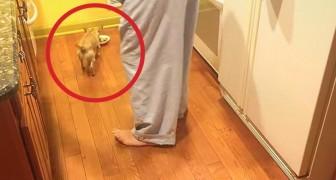 Ze adopteren een hond: zijn reactie tegenover het eten is indrukwekkend