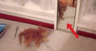 El gato se ve en el espejo: su reaccion es decididamente graciosa
