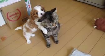 Det här är den mest tålmodige katt ni någonsin sett... Vilket behärskande!