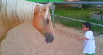 Un cheval s'approche d'un enfant spécial: une pure émotion vous attend!