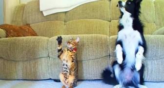 Uma disputa emocionante entre um cão e um gato