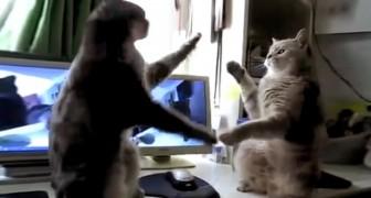 Il commence à filmer ses chats: ce qu'ils font va vous faire mourir de rire