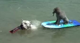 De honden komen aan op het strand... Wat ze doen verandert je dag!