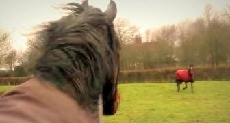 Estes cavalos ficaram separados por quatro anos: veja o que acontece quando se reencontram