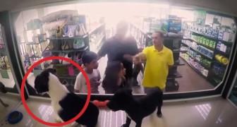 Scambiano i cani di razza con dei randagi: ecco le reazioni dei clienti del negozio