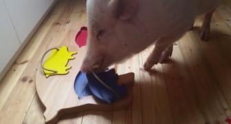 Sembra un normale maiale domestico, ma guardate cosa riesce a fare: è GENIALE!