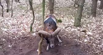 Ein wildes Tier ist in Gefahr: Was dieser junge Mann macht ist wirklich HELDENHAFT