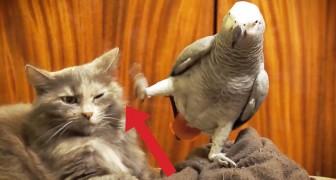 Este papagallo quiere atencion de su amigo: su reaccion es impresionante...