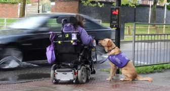 This disabled woman needs help here: this is what her dog does for her every day!
