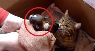 Sie setzen einen Hund in eine Schachtel mit Katzen: Die Reaktion der Mutter ist überraschend