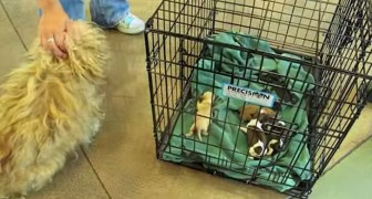 They bring back together a mom with her puppies ... Her reaction will make you cry