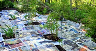 He lays out old newspapers in the garden: here's an easy and time-saving TRICK for your garden !