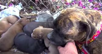 Sie wurden als Welpen gerettet und adoptiert: Das passiert, wenn sie sich sechs Monate später wiedersehen