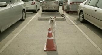 Un chien attend son ami dans un parking: la raison va vous émouvoir :)
