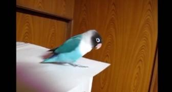 Han sätter på sin favoritlåt och börjar filma: papegojans reaktion är underbar!