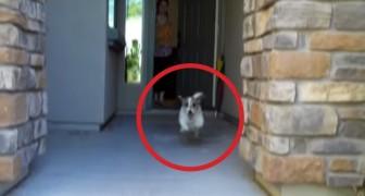 Sie öffnet die Haustür: Was ihr kleiner Hund macht, wird euch ein Lächeln ins Gesicht zaubern