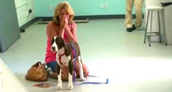 O seu cão volta a caminhar depois de 3 meses: a reação da dona vai te emocionar!