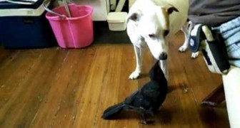 Uccellino dà da mangiare al cane
