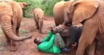 Un elefantito aterrorizado es abandonado de la madre: aqui la nueva FAMILIA!