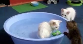 Die Katzen haben eine seltene Leidenschaft... Wusstet ihr das?