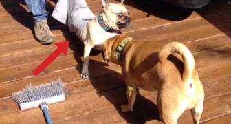 Deze honden zijn in de problemen geraakt door hun nieuwsgierigheid!