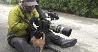 Un gato abandonado se acerca a un fotografo: lo que sucede poco despues no tiene precio