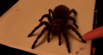 Het lijkt alsof hij een enorme spin aanraakt, maar niets is wat het lijkt!