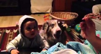 Le dicen al niño de llamar a la mama, pero hagan atencion al perro...DE NO CREER