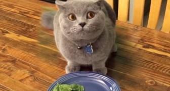 In soli 4 secondi, questo gatto COLPEVOLE vi farà piegare dalle risate!
