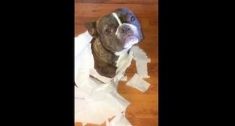 Il demande à ses deux chiens qui est le coupable de ce désastre, et un d'eux... fait la BALANCE!