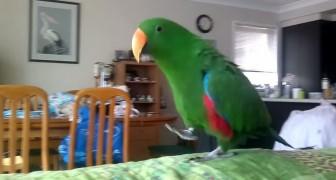 Ecco cosa succede quando questo pappagallo ascolta la sua musica preferita. Fenomenale!