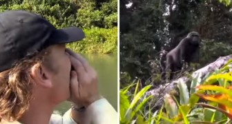 Il a sauvé un gorille et l'a libéré dans la jungle il y a 5 ans : voici comment il réagit quand il revient le chercher