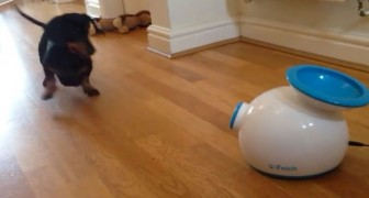 It seems a cleaning machine, but instead it has been created for the DOG. Look at how he uses it!