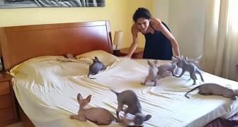 Dit is wat er gebeurt als ze haar bed probeert op te maken... wat een plezier!