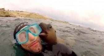 Estes mergulhadores recebem uma visita surpresa de alguns bebês focas!