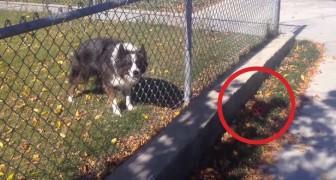 Este cãozinho quer brincar, não interessa com quem!