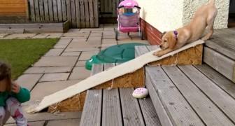 Este filhote tem medo de descer as escadas. A solução que ele encontra? Muito engraçada!